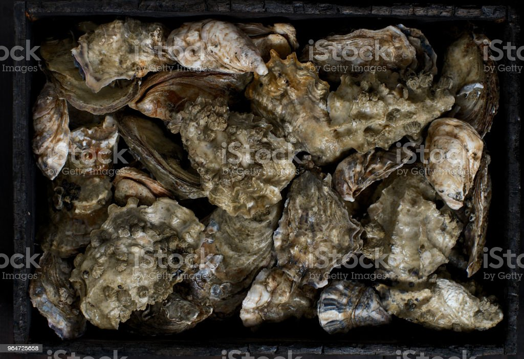 oyster,still life royalty-free stock photo