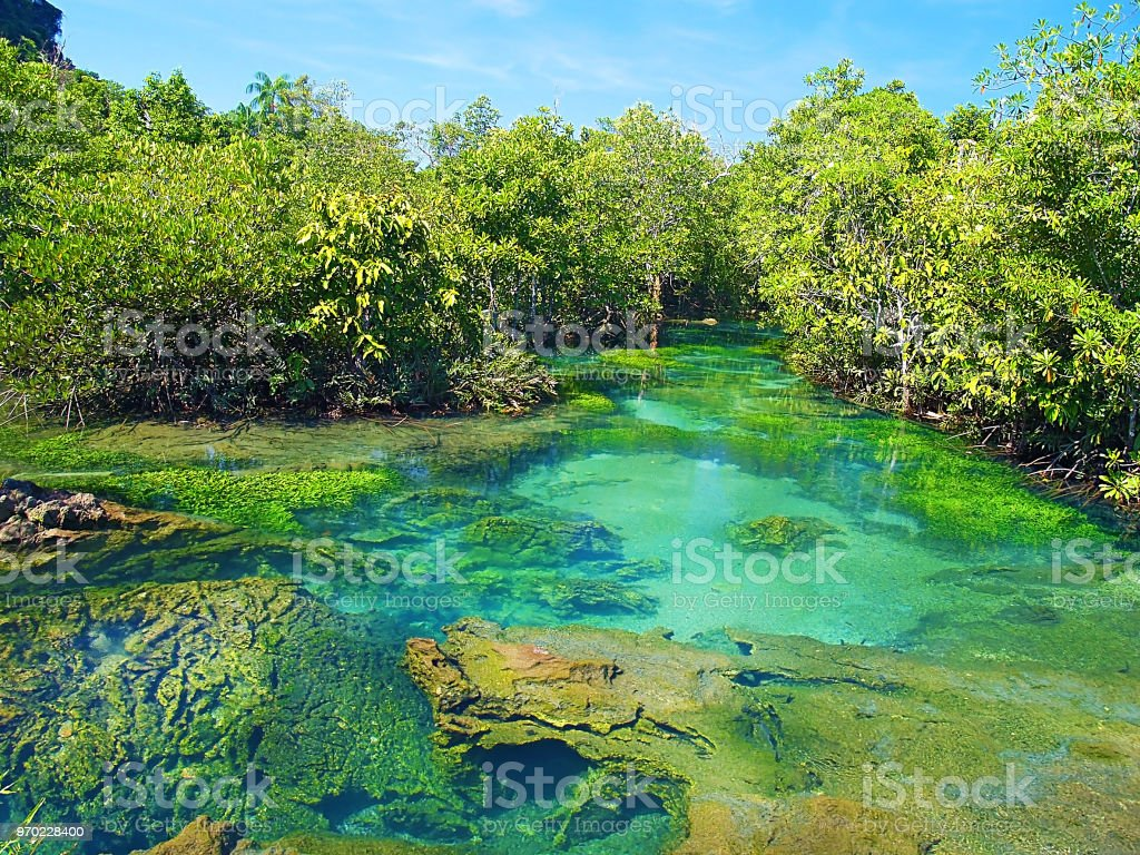 Pa Phru Tha Pom Khlong Song Nam amazing place to observe nature stock photo
