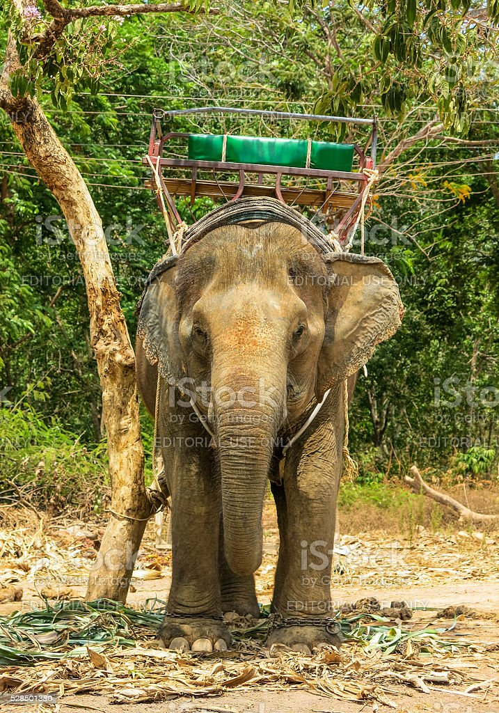 Pachyderm Carrying Seat on Back Thailand stock photo