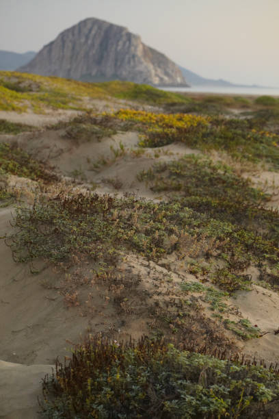 pacific coast dunes - morro bay - central coast california stock photos and pictures