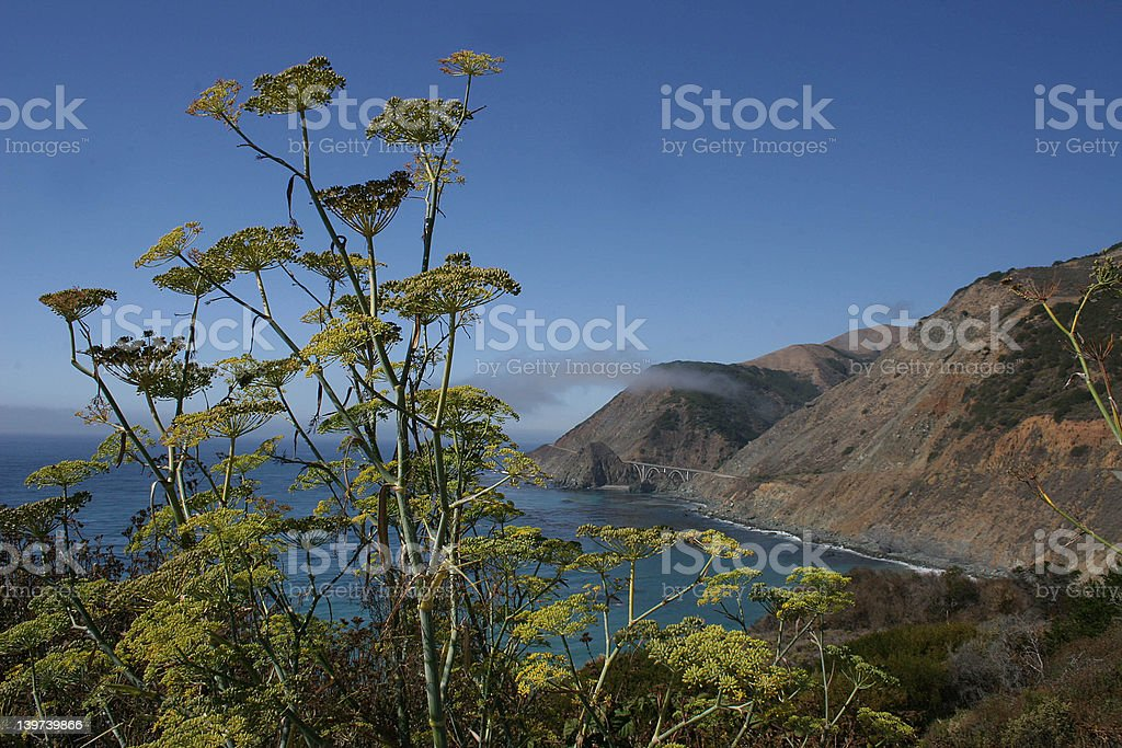 Pacific Coast Highway royalty-free stock photo