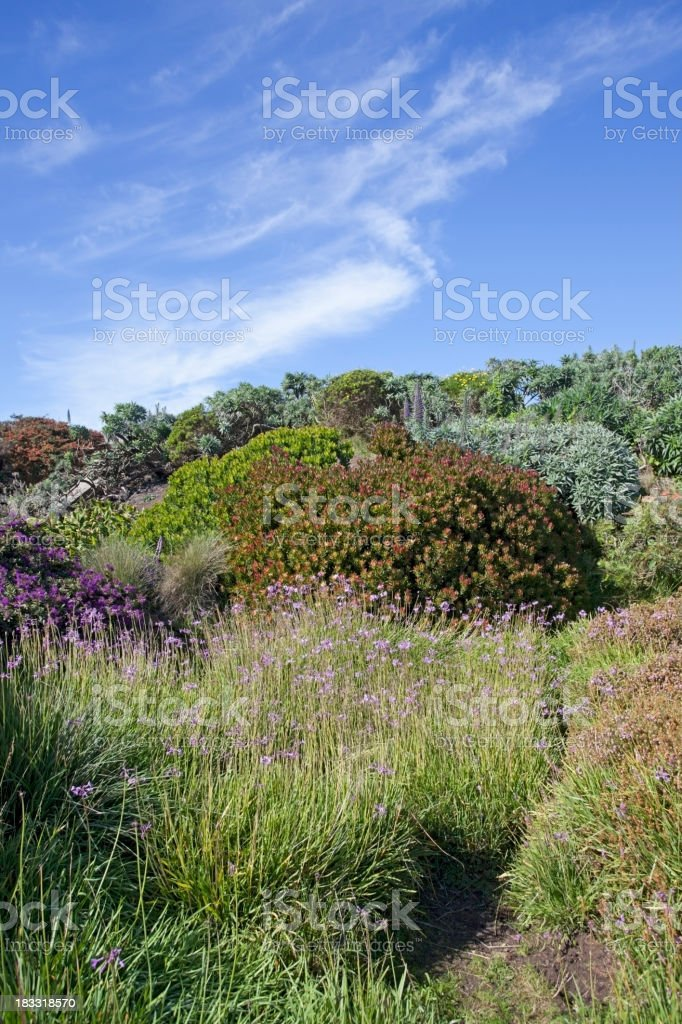 Pacific Coast Vegetation royalty-free stock photo