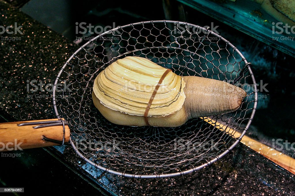 Pacific Giant Clam (Geoduck) stock photo