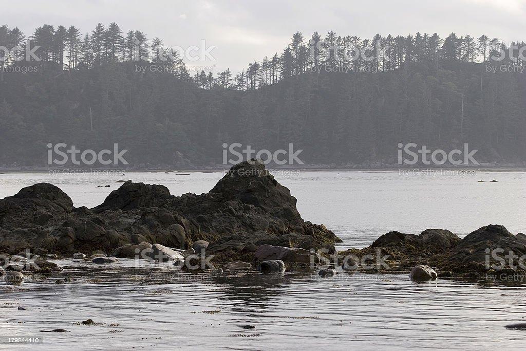 Pacific Northwest Coastline royalty-free stock photo
