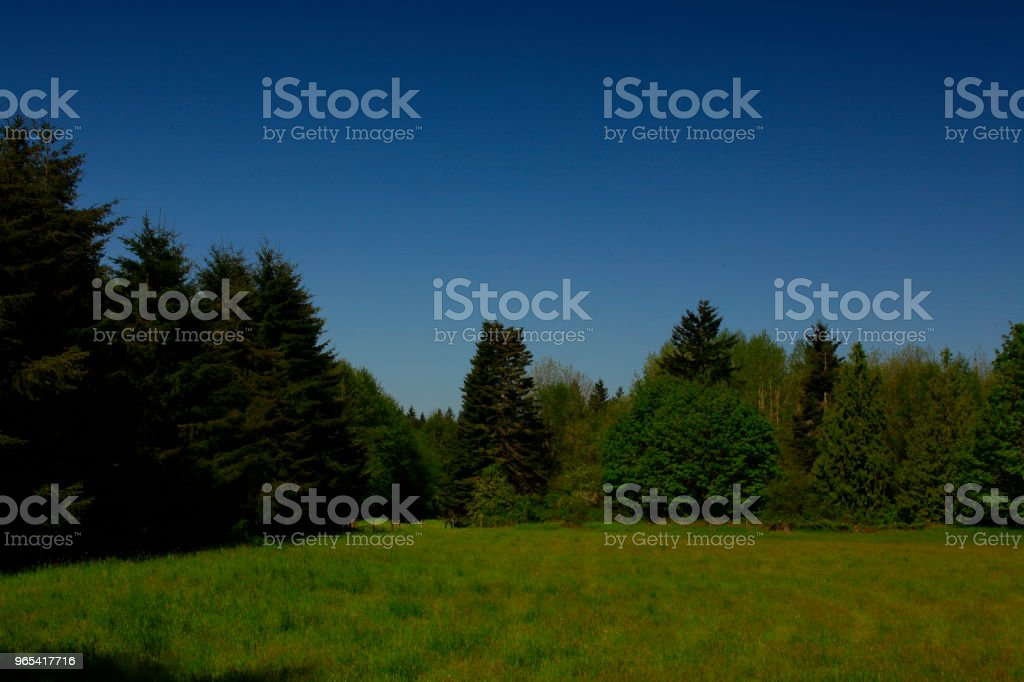 Pacific Northwest forest and meadow zbiór zdjęć royalty-free