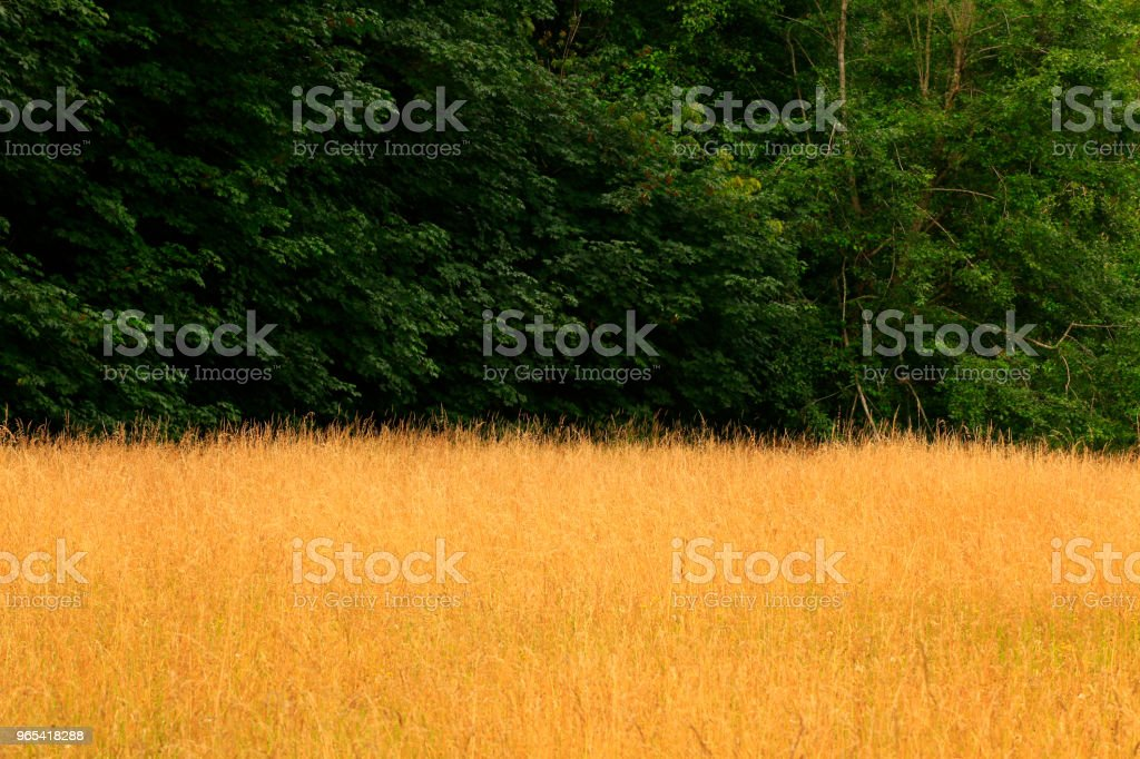 Pacific Northwest forest and Meadow royalty-free stock photo