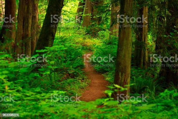 Szlak Leśny Pacific Northwest - zdjęcia stockowe i więcej obrazów Bez ludzi