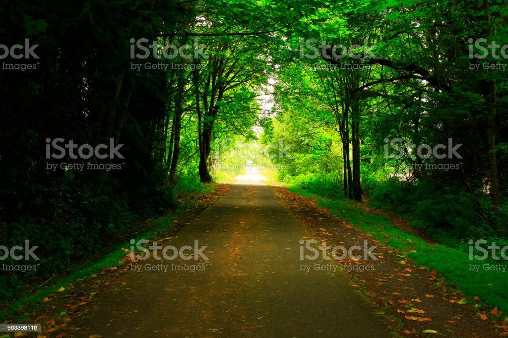 Pacific Northwest forest hiking trail - Zbiór zdjęć royalty-free (Bez ludzi)