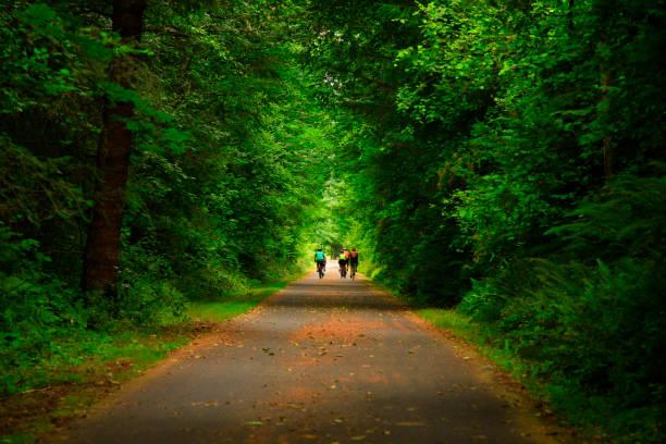Pacific Northwest forest hiking trail – zdjęcie