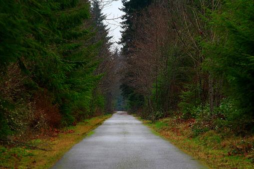 퍼시픽 노스 웨스트 숲 하이킹 코스 0명에 대한 스톡 사진 및 기타 이미지