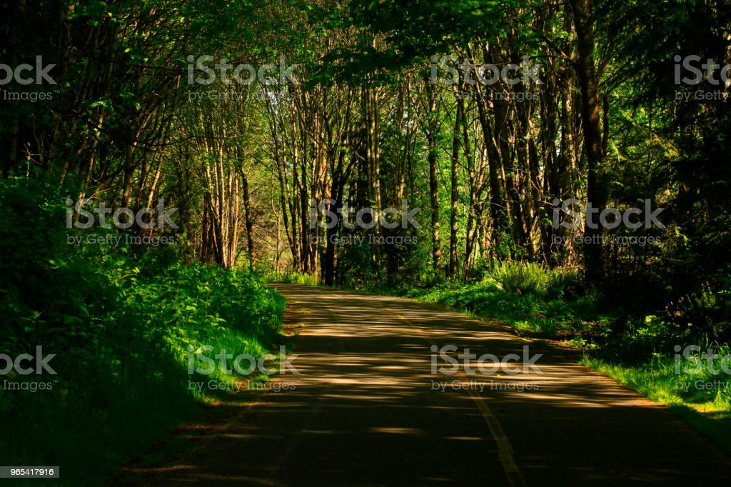 Pacific Northwest forest hiking trail royalty-free stock photo