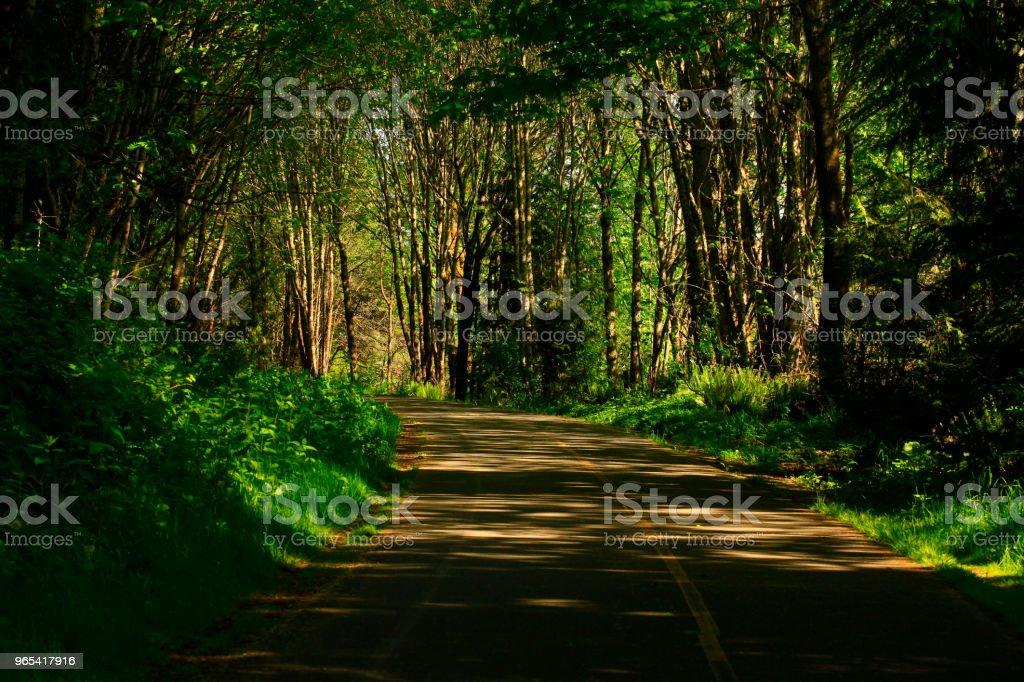 Pacific Northwest forest hiking trail zbiór zdjęć royalty-free