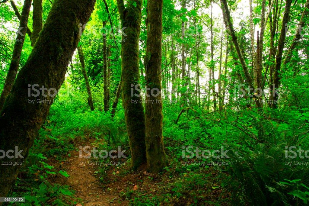 Pacific Northwest Wald-Wanderweg - Lizenzfrei Abenteuer Stock-Foto