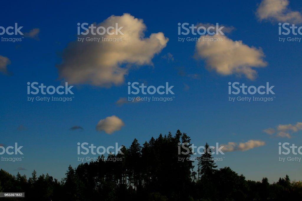 Pacific Northwest forest - Zbiór zdjęć royalty-free (Bez ludzi)