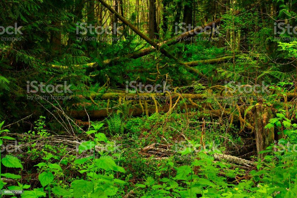 Forêt du Nord-Ouest Pacifique - Photo de Arbre libre de droits
