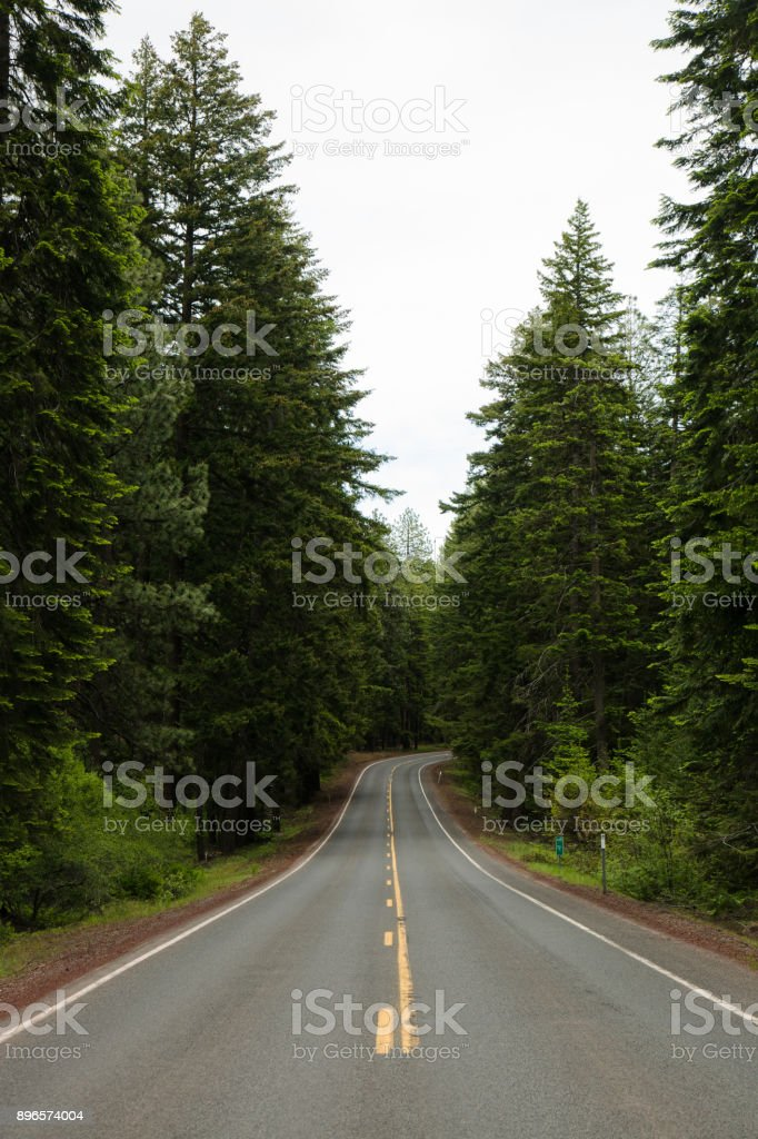 Pacific Northwest Forest Road stock photo