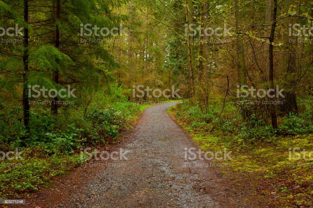 Foto De Noroeste Do Pacifico Forest Road E Mais Fotos De Stock De Aventura Istock