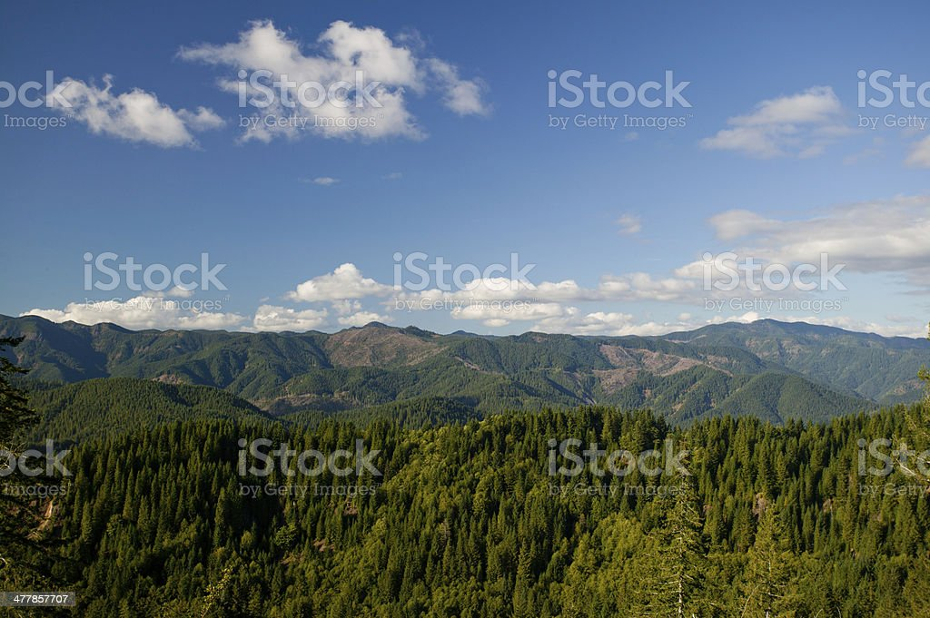 Pacific Northwest Forest view with clearcuts royalty-free stock photo