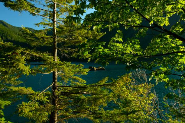 Pacific Northwest fresh water lake – zdjęcie