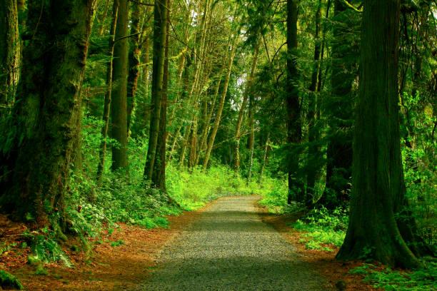 Pacific Northwest rainforest road – zdjęcie