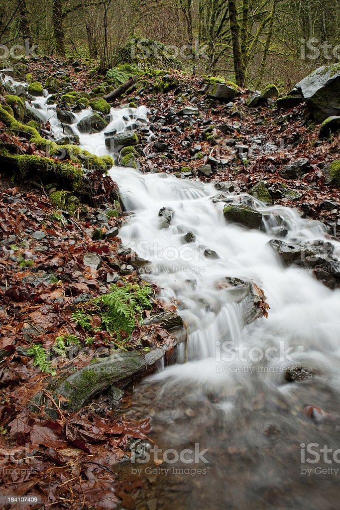 Pacific Northwest stream stock photo
