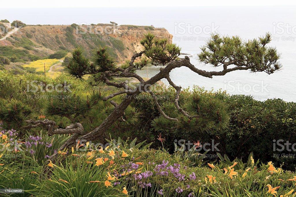 Pacific Ocean Cliffs, View From Wayfarers Chapel stock photo