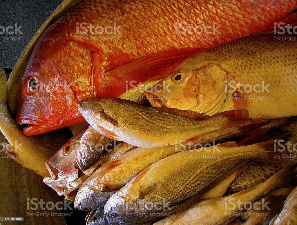 Pacific Ocean Fish stock photo