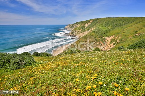 Pacific coastline filled with spring wildflowers at Point Reyes.