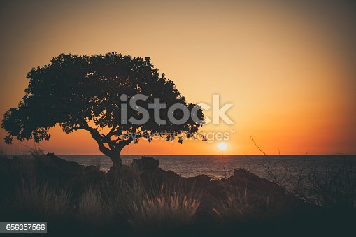 tree silhouette on big island, hawaii.