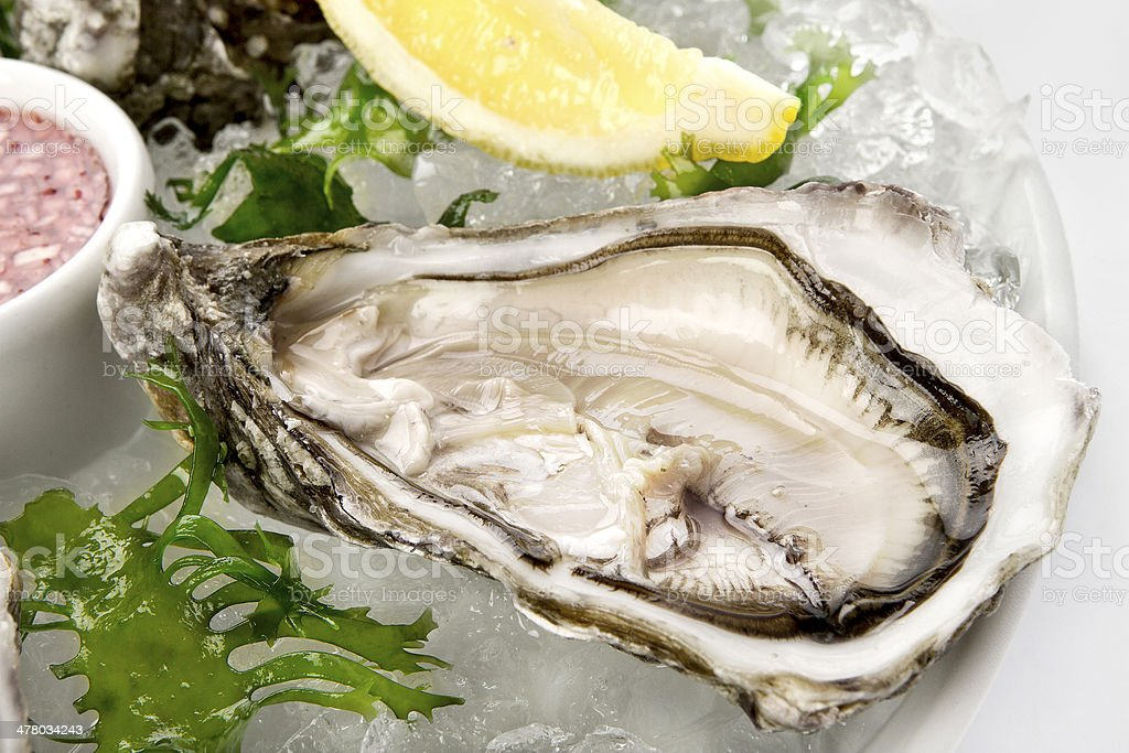 Pacific Oyster Crassostrea gigas stock photo