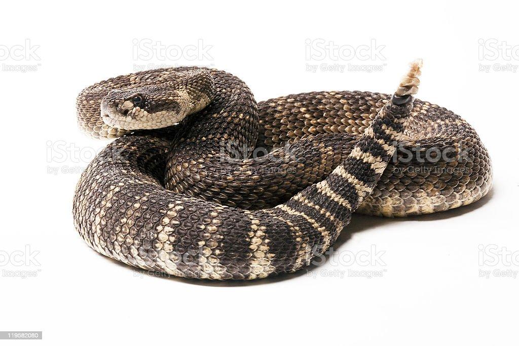 Serpiente de cascabel del Pacífico - foto de stock