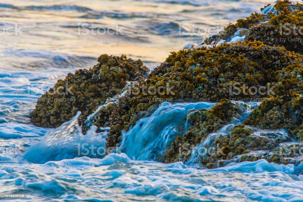 Pacific Rim National Park stock photo