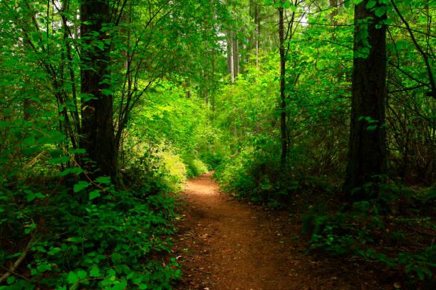 Pacific Southwest forest hiking trail – zdjęcie