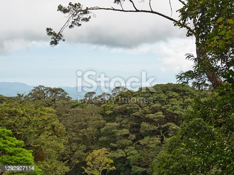 Santa Elena, Monteverde, Provincie Puntarenas, Costa Rica
