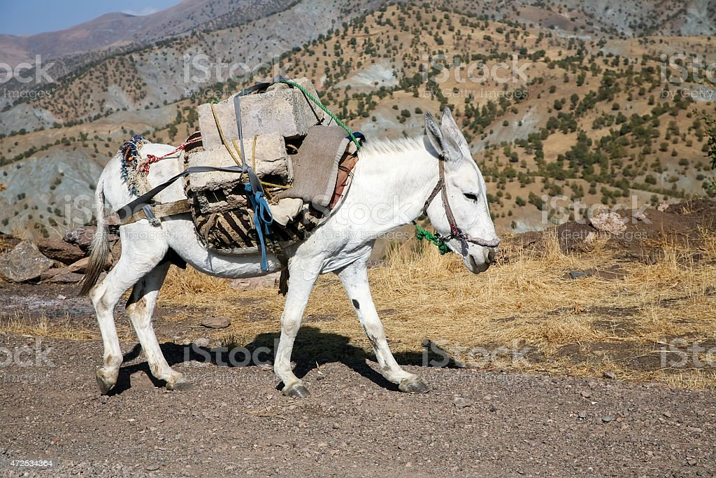 Pack horse stock photo