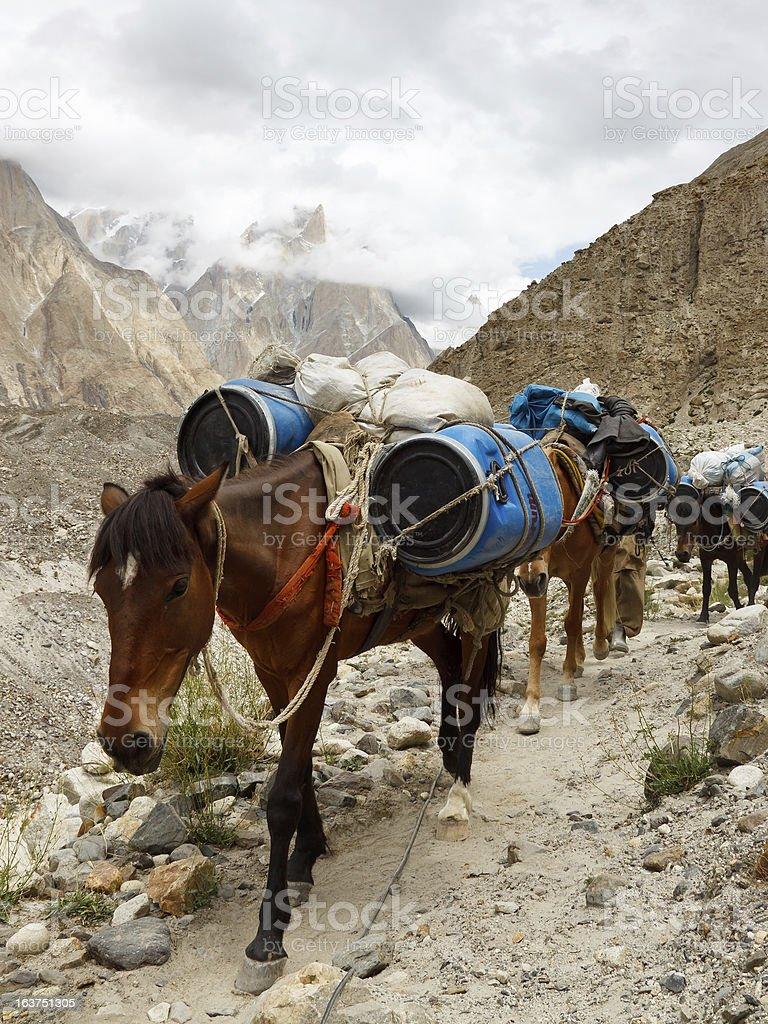 Pack Horses in the Karakorum Mountains, Pakistan royalty-free stock photo