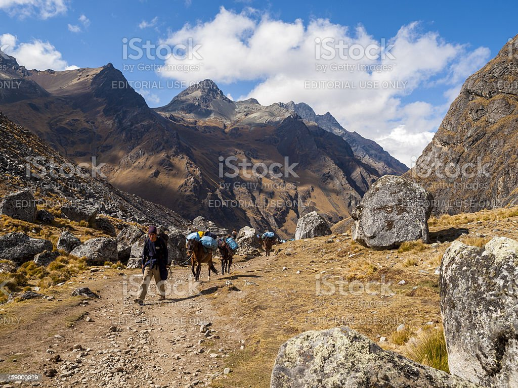 Pack Horses on the Salcantay Trail, Peru royalty-free stock photo