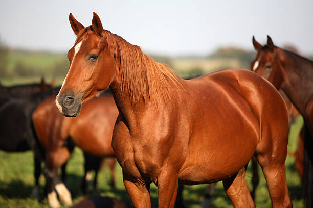 pack of horses - horse stock pictures, royalty-free photos & images
