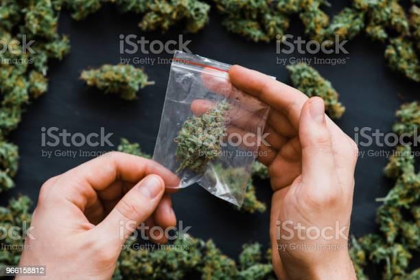 Paketet Ogräs I Hand En Massa Marijuana Paketet Med Ogräs Och Färska Knoppar Cannabis Många Ogräs Kopiera Spase Kopiautrymme Gemensamma Färska Gröna Knoppar-foton och fler bilder på Fotografi - Bild