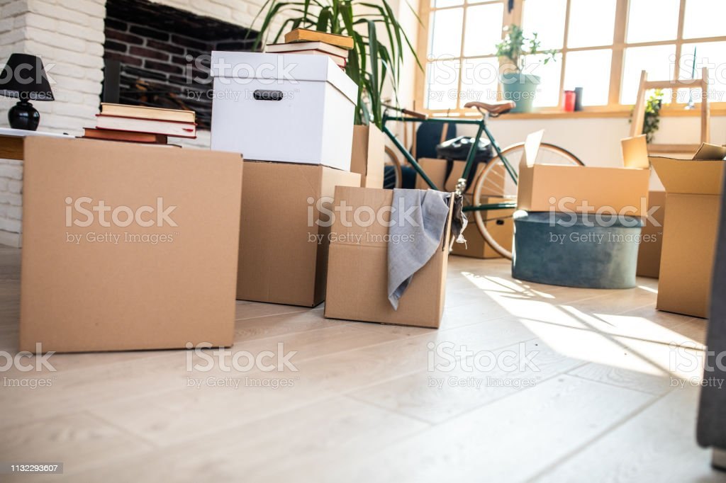 Packed Cardboard boxes in apartment, bicycle, plant in flower pot