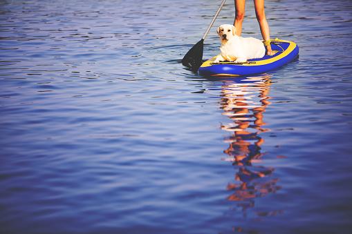 Paddleboarding with dog
