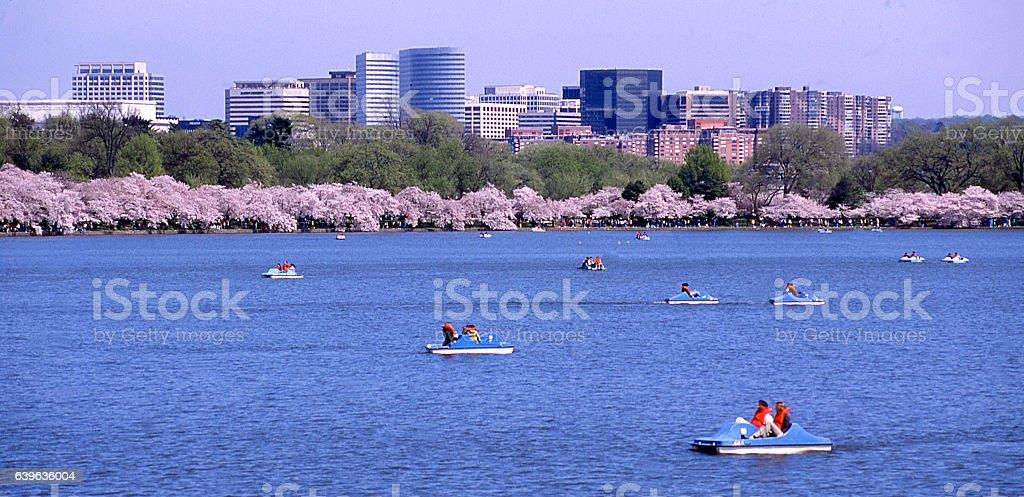 Paddleboats Tidal Basin Potomac Crystal City Cherry Blossoms Washington DC stock photo