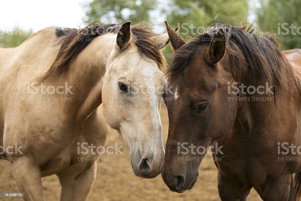 Paddock Buddies stock photo