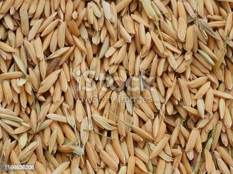 Cereal Plant, Food, Food and Drink, Rice - Cereal Plant, Rice - Food Staple
