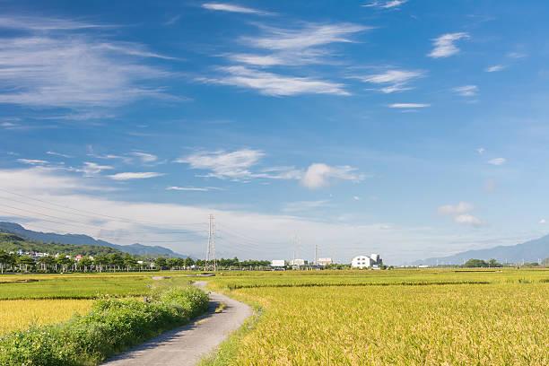 paddy farm stock photo