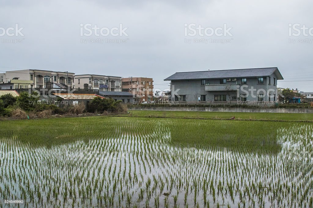Paddy Field and lodging stock photo