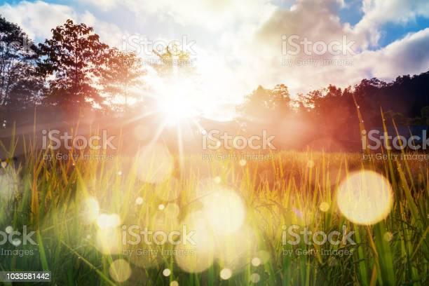 Photo of Paddy field farming at sunrise