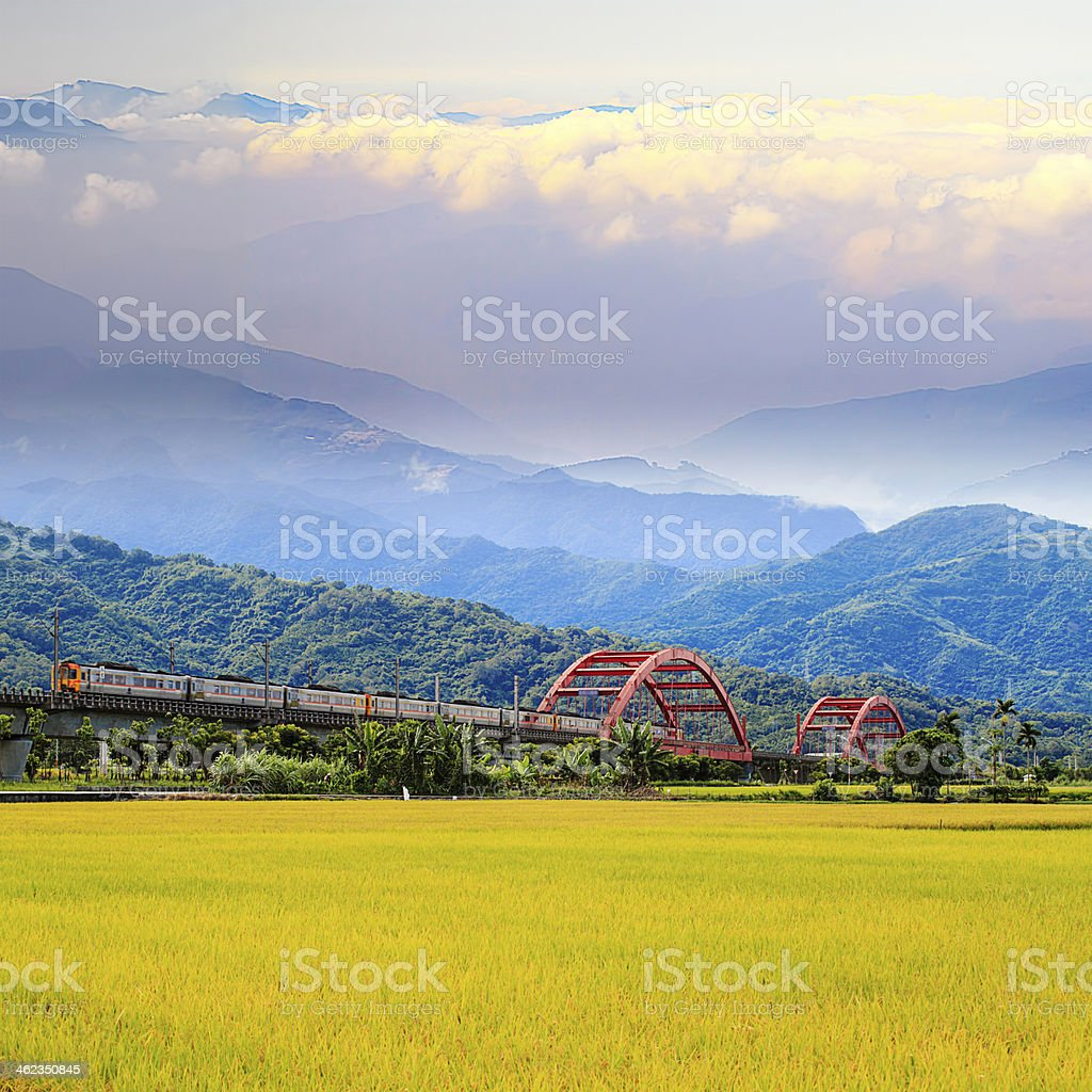 Paddy field in the morning stock photo