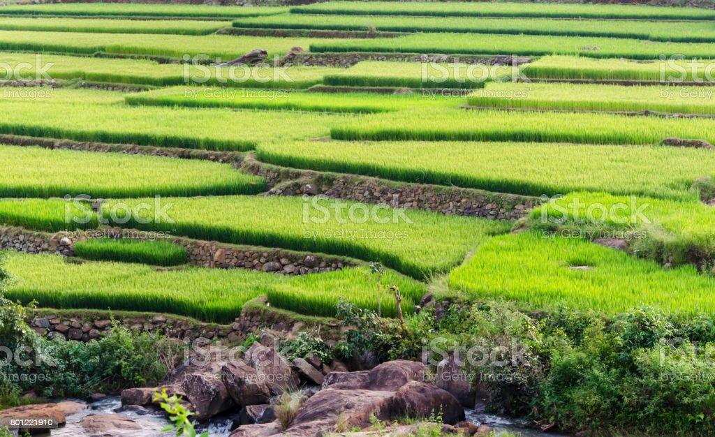 Paddy fields @ Araku,Visakhapatnam stock photo