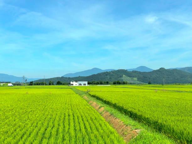 Minamiuonuma 稻田圖像檔